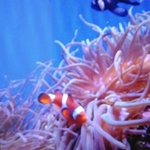 I found Nemo and his friends