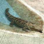 Very clean and well looked after crocodile enclosures