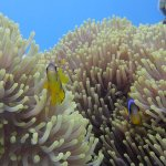 Photo of Aqua Nabq Dive Center