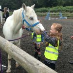 Meeting the horses for grooming