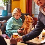 The Prince Albert - Dogs welcome