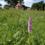 Wild orchids at Bailiffscourt Hotel.