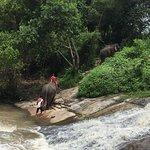 Photo de Patara Elephant Farm - Private Tours