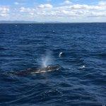 Whale alongside the boat