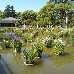 Photo of Dazaifu Temmangu Shrine