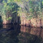 Alligator River National Wildlife Refuge Foto