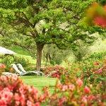 Garden with azaleas in bloom