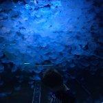 Photo of Aquarium Mare Nostrum