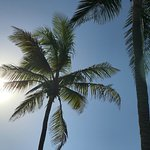 Sunrise through our lovely Coconut Palms