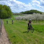 Cycle the Vineyards Tour
