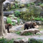 Photo de Bronx Zoo