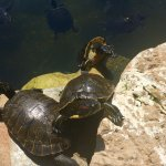 Photo of Marineland Majorca