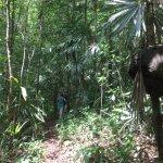 Jungle hike, passing termite nest
