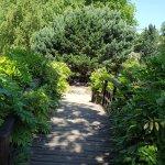 Bridge over duck pond