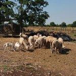 Photo of Relais Agriturismo Ormesani