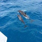 mama & baby dolphin swimming near the boat!