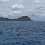 pod of dolphins swimming near us