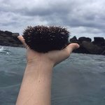 sea urchin in my hand!