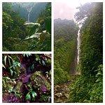 Photo of Carbet Falls (Les Chutes du Carbet)