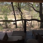 Photo of Dulini Lodge