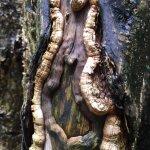 Cool tree along Pipiwai Trail