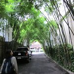 the tree-arch driveway