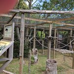 Animal Enclosure