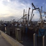 Fishing fleet from the wharf