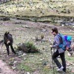 Foto de Peru Path