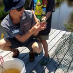 Marsh Madness - catching blue crabs