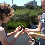 Marsh Madness - identifying gender of blue crabs