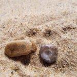 small Petoskey stones