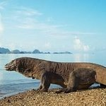 Photo of Komodo National Park