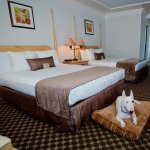 A pet-friendly hotel room with two queen beds