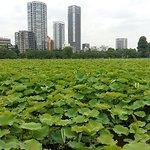 Photo of Shinobazu Pond