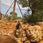 Caterina la gibboncina