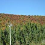 Autumn in the Laurentians