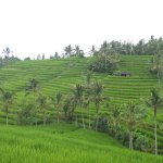 is a favorite tourist destination in Bali famous with the beautiful rice terrace