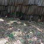 Colobus Conservation Foto
