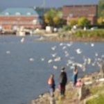Lake Chaplain, Burlington