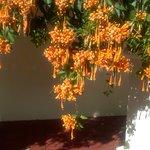 flores en el patio.