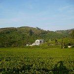 Tea garden walk