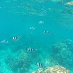 Beautiful ocean. Good for snorkelling beginner, very safety. But price is high (BTH $2200). Long