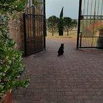 Le chat de Luccia garde l'entrée de Terrapille