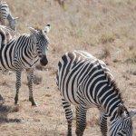 Photo de Parc national de Nairobi