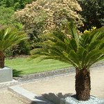 Exotic Cycads