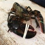 Ryer Lobsters Foto