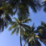 View while lying down on poolside deck chair