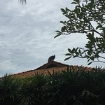 Peacock perched on the roof of our water chalet