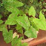 Rich Flora in Durshet